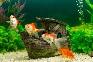 A fish tank.