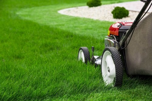 The Best Lawnmowers for Your Garden
