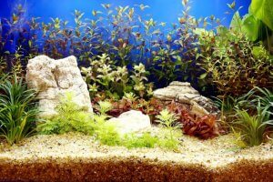 Fish tank plants.