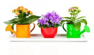 Colored watering cans.
