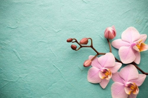 Orchids - Exotic and Fascinating