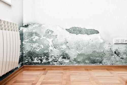 Moisture in an uninhabited house.