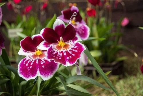 Small purple orchids