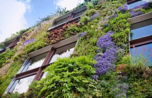 A building with a living wall.