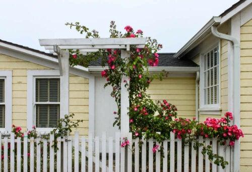 A crawling rose bush.