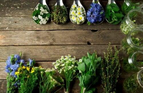 An assortment of herbs.