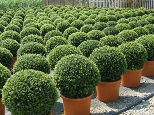 There are many types of bushes for your garden that offer different color choices.