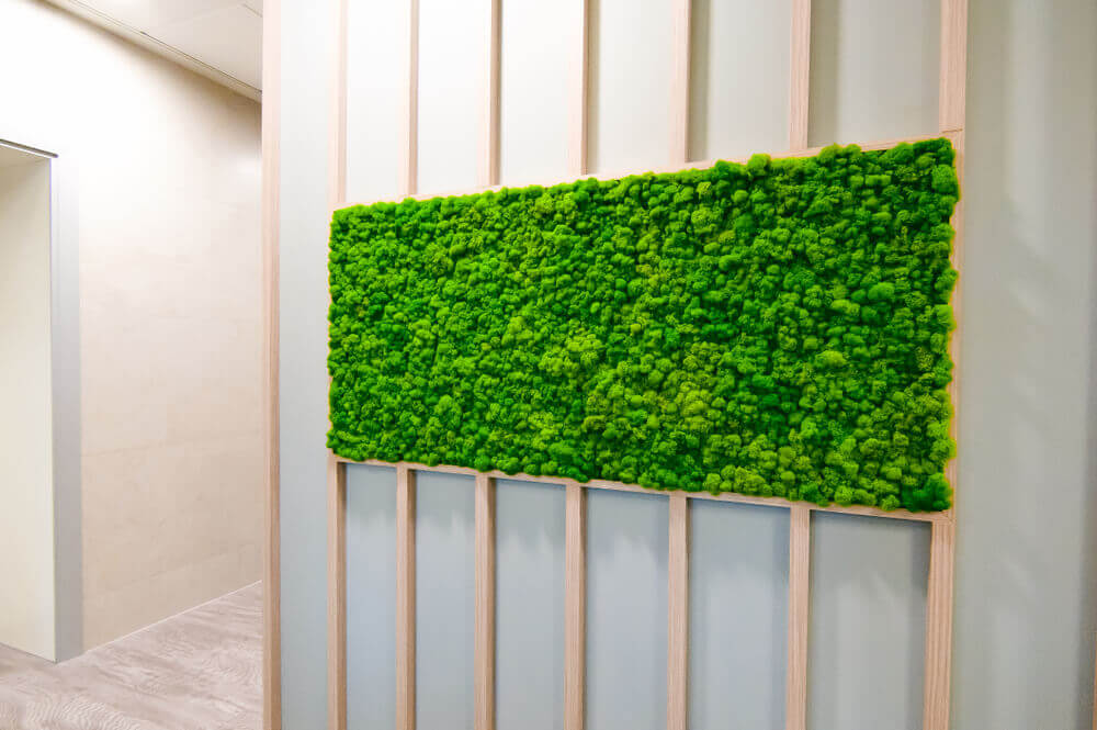 Moss on a white wall as a decoration
