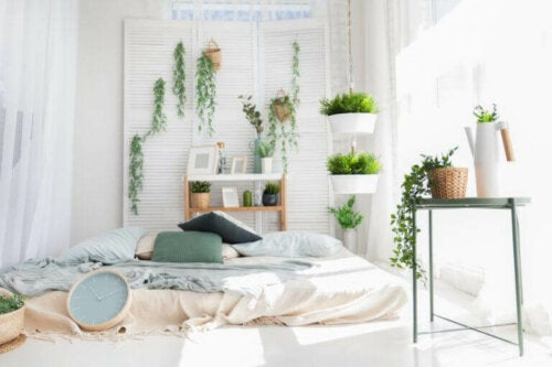 The Importance of Using Plants in Home Decoration