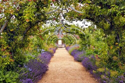 A Mediterranean or An English Garden?