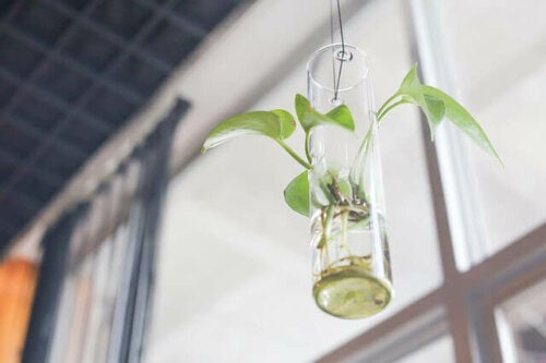 When decorating your living room with plants, you can opt for the hanging kind. They give a natural vibe to the place.