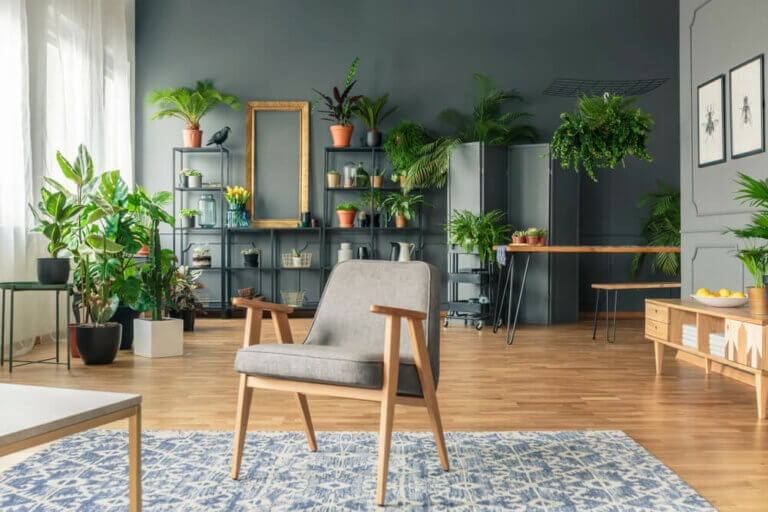 Decorating Your Living Room with Plants