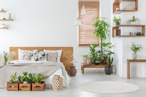 Using plants to create a more elegant home.