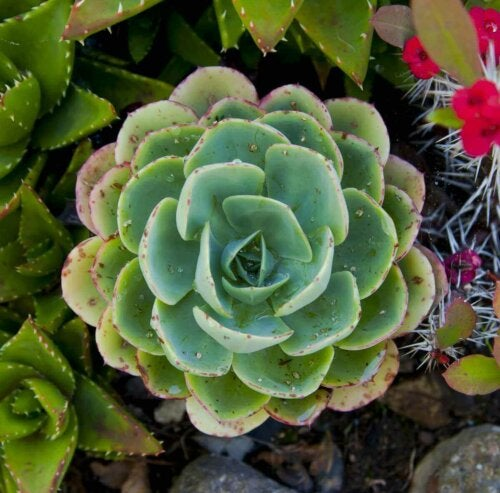 Succulents are easy to care for plants.