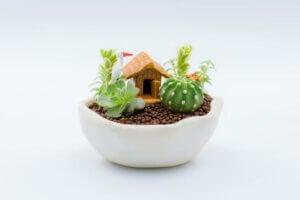 A miniature garden.