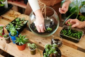 Planting a miniature garden.
