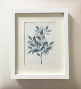 식물 삽화
