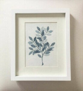 Botanical illustrations.