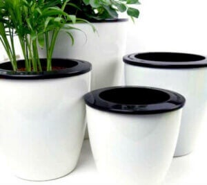 Self-watering plant pots.