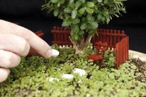Stones in a miniature garden.