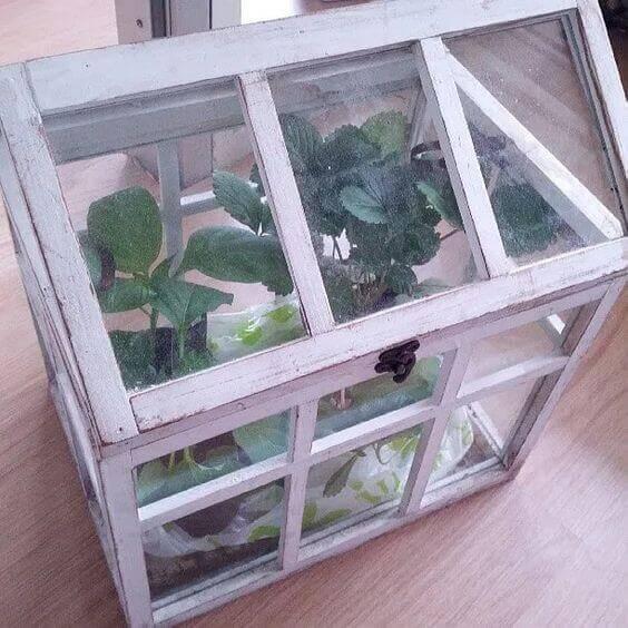 A terrarium with plants inside