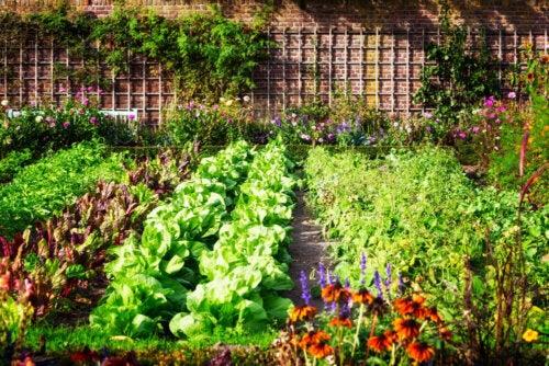A beautiful vegetable garden.
