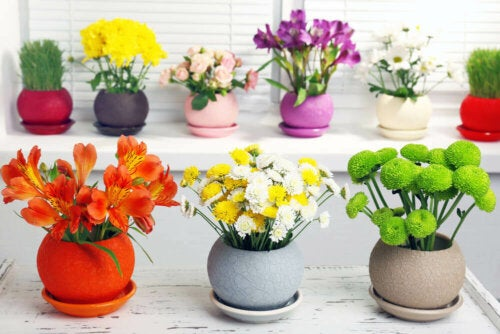 Some colorful pots of flowers.