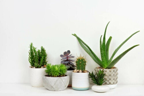 Some pots with house plants.