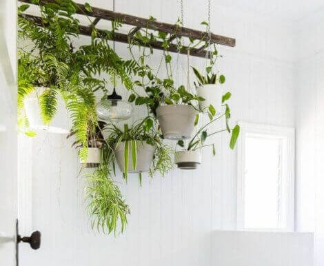 Use plants to update your bathroom