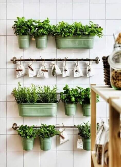 A variety of aromatic plants growing in a kitchen