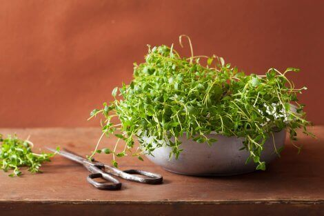 A flower pot with thyme growing in it