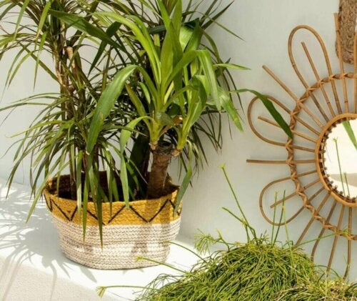 Woven Baskets: Handcrafts Haven't Gone Out of Style