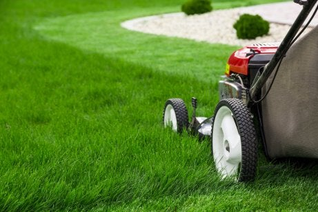 A lawn mower, important for lawn care