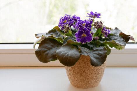indoor plants that need low light