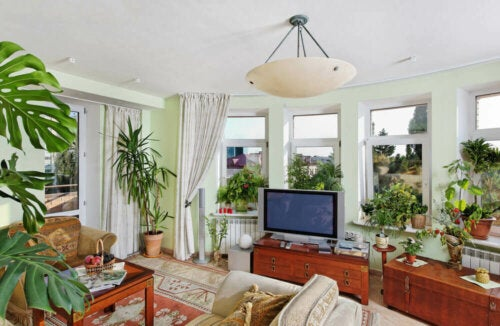 A living room with lots of plants.