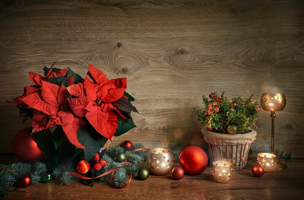 Christmas with poinsettias.