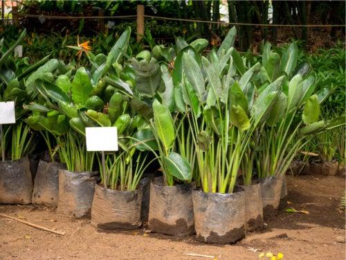 Some plants in a nursery.