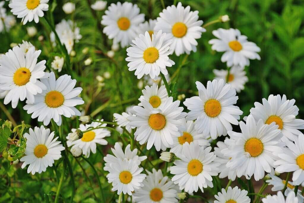 Do You Know the Meaning of Flowers?