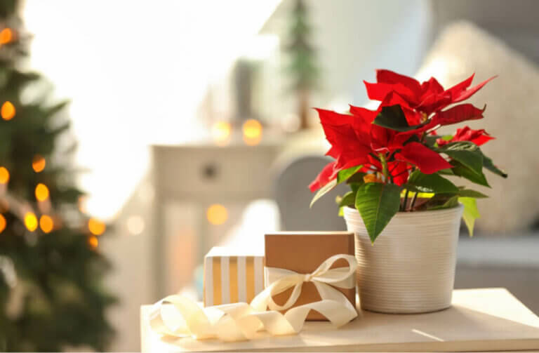 5 Great Ideas for Decorating with Poinsettias