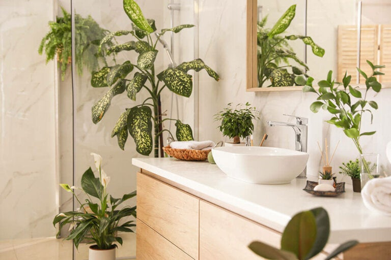Know The Best Plants For The Bathroom
