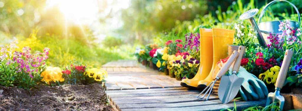 How to Design Your Garden