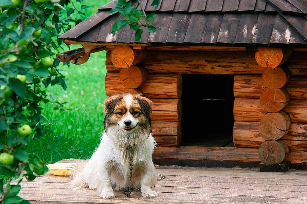 Paint and Renovate Your Dog's House
