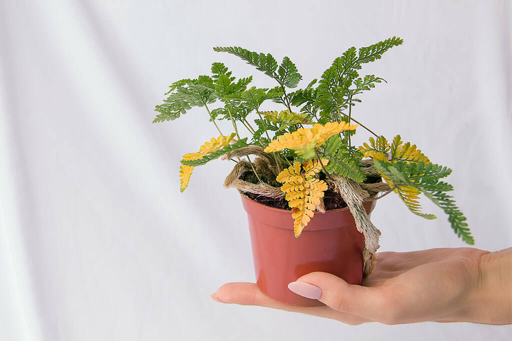 Prevent Indoor Plants From Turning Yellow: Home Tricks