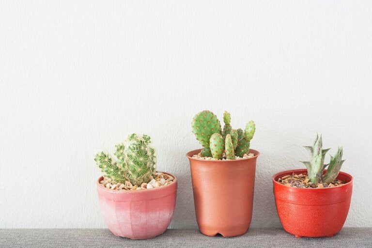 Negative and Toxic Plants That Shouldn't be Indoors
