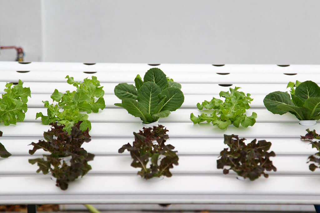 Tips for Growing Hydroponics at Home