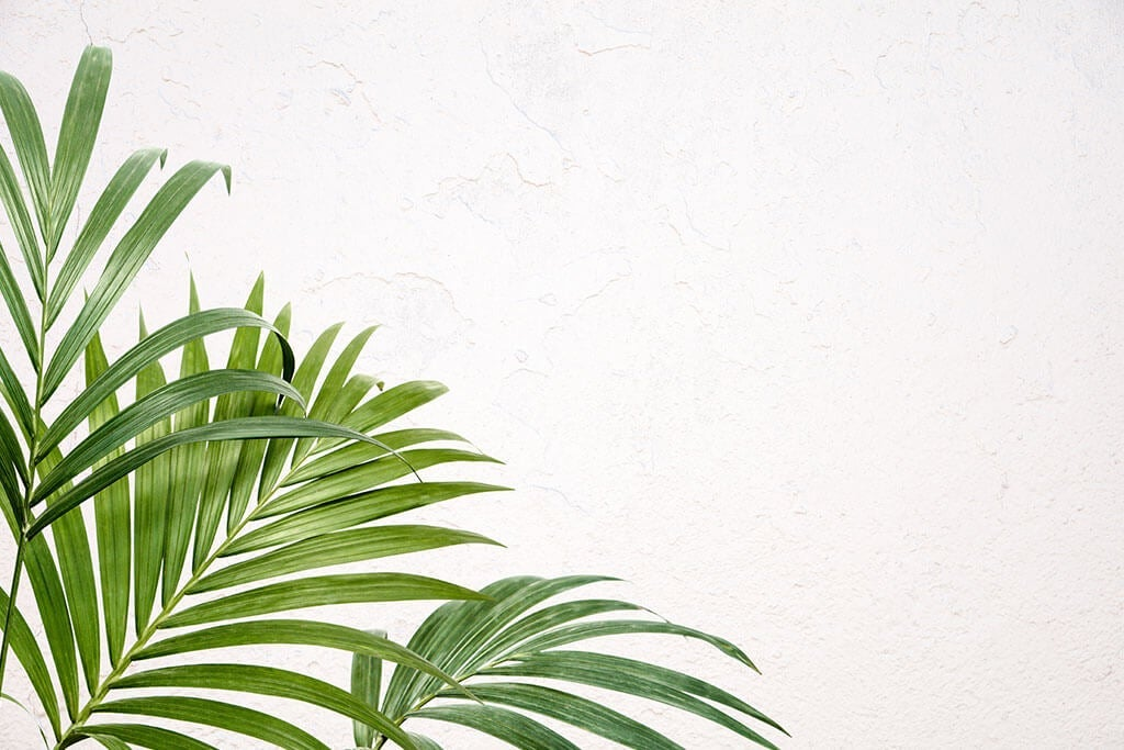 Kentia: The Indoor Palm Tree That You Have to Know