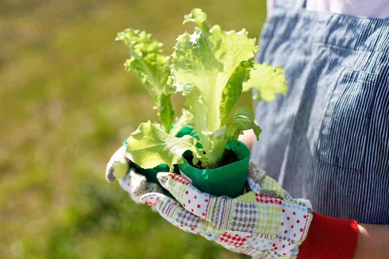 5 Fruits and Vegetables For You to Grow at Home