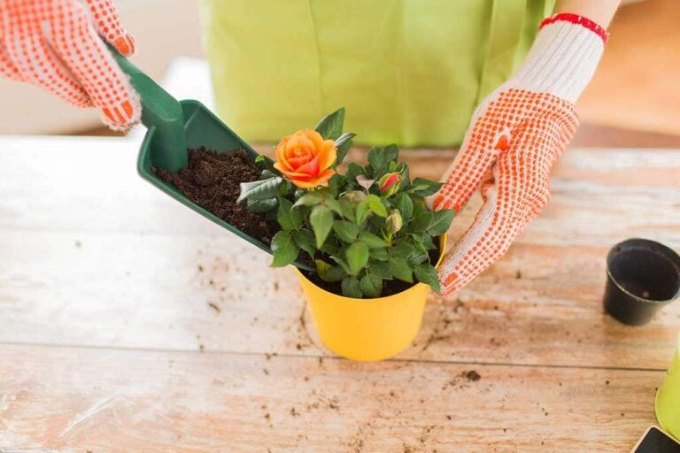 Homemade Fertilizers for Your Plants
