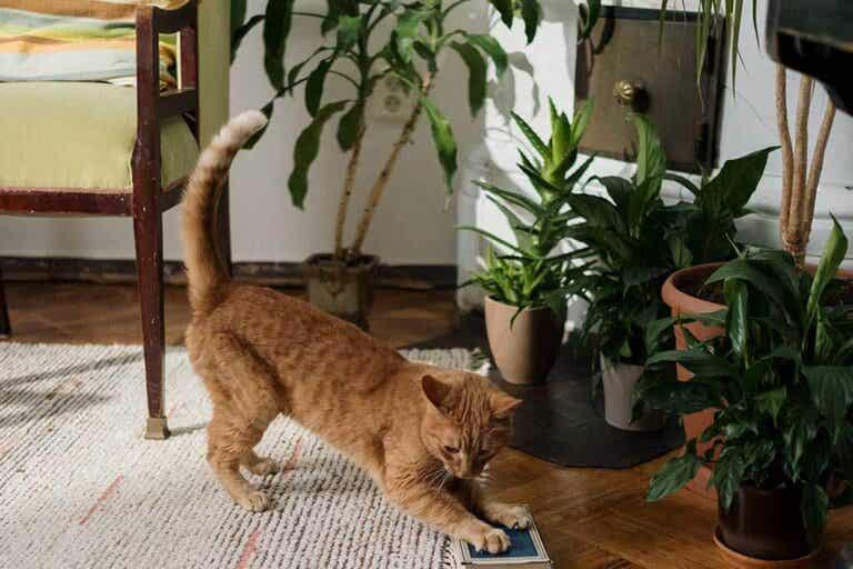 10 Pet-Friendly Indoor Plants